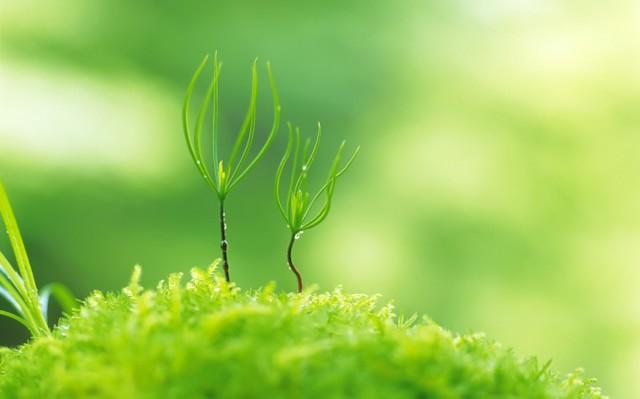| 【平成29年春分の日遠隔ヒーリング】「はじまりのエネルギーに乗る」★「ラ・バルカ」おみくじメッセージ付き